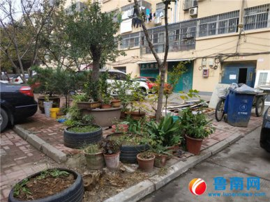 三里庄花园小区:绿化带堆着花盆 满地落叶无人清