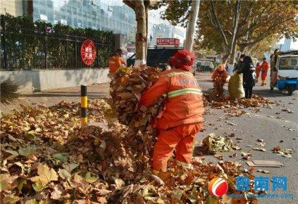 法桐落叶,临沂城区环卫工日清落叶160余吨