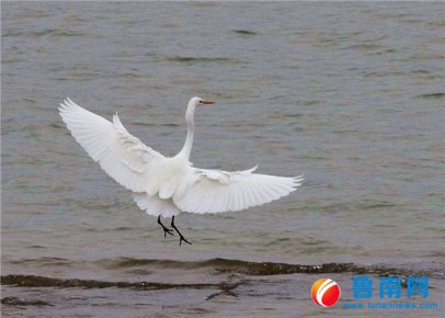 生态优美,群鸟翔集