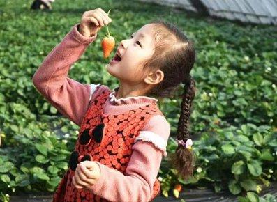 节后大量上市,草莓身价较去年低三成 大而不强,临沂草莓产业
