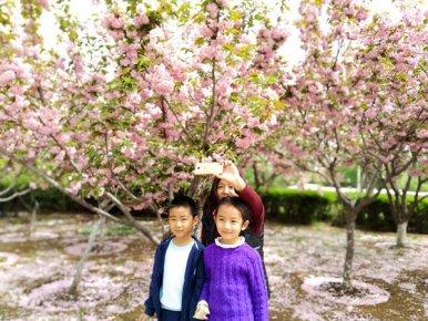 临沂市园林局樱花节开幕