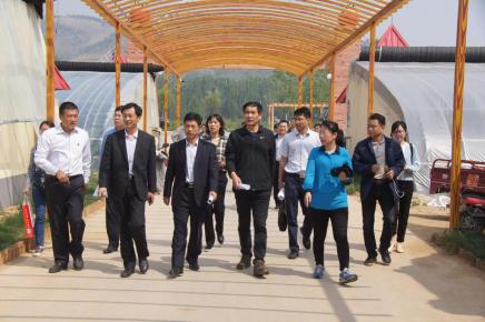 临沂市市直帮扶部门到桃墟镇调研金水河田园综合体项目