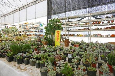 临沂多肉植物市场价格跳水