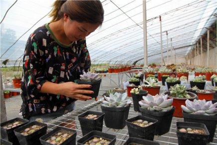 90后农家女创业养多肉花卉