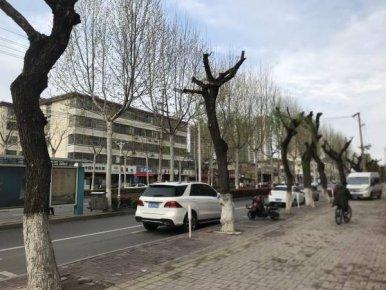 应对柳絮重剪树木!临沂兰山老城区多个路段柳树被�