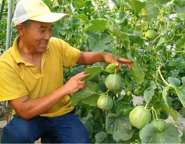 临沂河东区梅家埠街道:小甜瓜种出甜蜜新生活