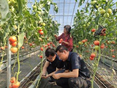 粪的翻转――看沂南县如何实现农牧产业的循环