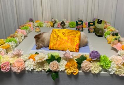 临沂宠物殡葬师赵鸣:宠物与主人的连接者和倾听者